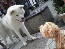 10分近くも視線をはずさず見つめあう2犬^_^;