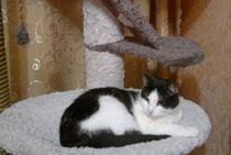мастерская любимый кот