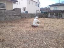 埼玉県からの個人ボラさん