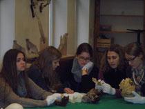 Schüler untersuchen Schädel