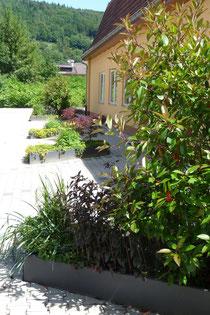 Firmenaußenanlage: Eingangsbereich mit Parkplatz - Immergrüne Bepflanzung mit Frühjahrsblüte.