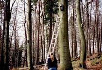 Fledermauskasten-Kontrolle im Eberbacher Stadtwald