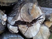 Holzstapel bei Fünfeichen Jan. 2014 [Foto A.M]