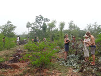 En pleine plantation
