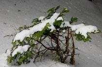 l'hiver au mois de mai