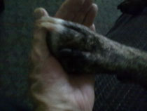 Meine Hand und deine Pfote