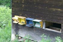 Bienenhaus mit 3 Völker