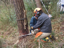 伐採 植木 庭木