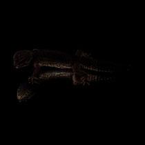 Leopardgecko 'Holly' Black Night cross Wild type