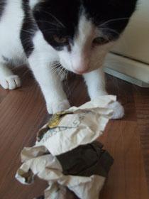 Kleiner Kater spielt mit Papierkugel