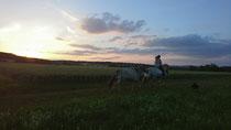 Das Glück der Erde liegt auf dem Rücken der Pferde ☘ 😍 🦄 🐴 ❤