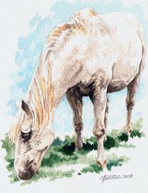 Paso, le cheval blanc