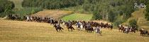 Deutscher Kavallerieverband, Schlacht bei Komarow, Polen, 2013, Rossfoto Dana Krimmling