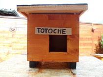 TOTOCHE