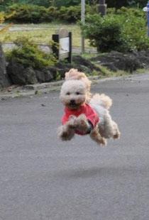 飛躍にチャレンジ!! Fortunate leap!!
