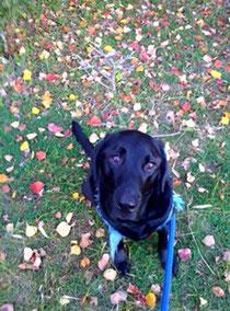 早足でお散歩!犬と私の骨に◎
