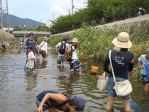 8月7日(土) 宮川での生物観察会