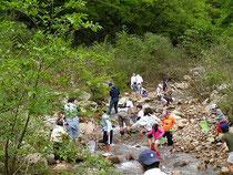 5月9日 芦屋川上流での水生生物の観察会