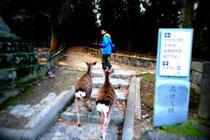 鹿に追い回され逃げる坊主