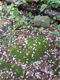 我が家の庭を彩る花びら