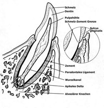 schematischer Zahnaufbau