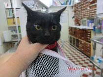 黒猫のタンゴ♪