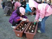 球根を植える保育所の子どもたち