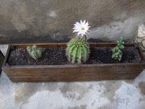 Mis cactus jardineras de madera - Jardineras baratas online ...