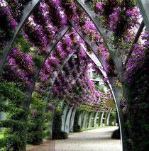 www.jardinerasisk.jimdo.com
