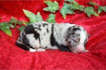 Ivy kurz nach der Geburt