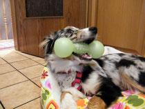 Ivy als Junghund
