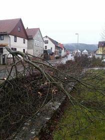 Heute Vormittag wurden die Bäume gefällt/ Bild: Onno Eckert