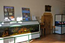 Nur zwei von mehreren Schaubecken (Links: Roter Piranha; Rechts: Meerwasserbecken)