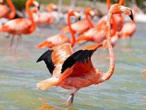 Entdecken sie Flamingos und viele andere Arten bei einer Bootstour