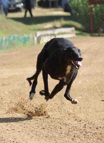 isaszeg rennbahn windhunde