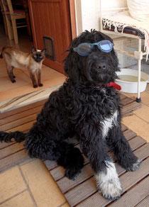 Wasserhund Sushi von annegret pannewitz