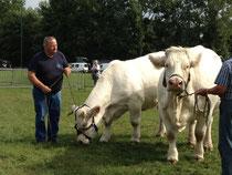 Jean-Louis Renault présente les vaches charolaises qui ont fait son exceptionnelle réputation d'éleveur dans toute la région et au-delà