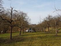 Obstbaumschneidaktion Februar 2020