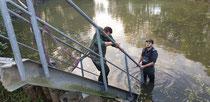 Einbau Treppe an Teich 2