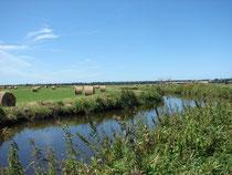 Marais du Bessin
