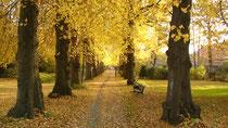 Herbst  Leer, Ferienwohnung, Urlaub, Nordseeküste