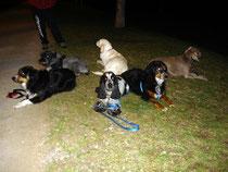 Exercice : Les chiens sont couchés en étoile
