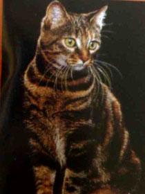 Gato europeo común, descendiente del africano.
