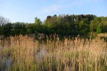 Aufforstungsprojekt in Bad Sachsa/Neuhof