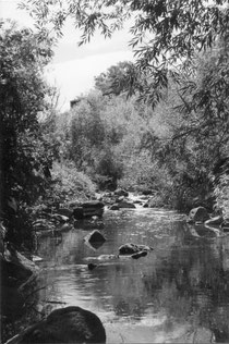 Darebin Creek 1970s, photograph by Laurie Course