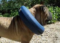 Le collier lune est une bonne alternative à la collerette parfois handicapante pour le chien.