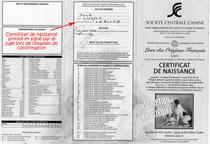Certificat provisoire de la SCC qui constitue une inscription provisoire au LOF du chiot.