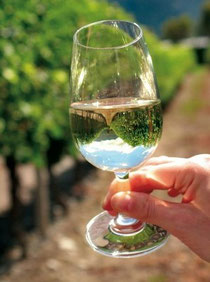 Making great wine from bad grapes is not possible, but making bad wine from great grapes sadly is all too easy