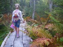 Hiking trail near Sugar Moon