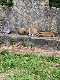 Kaninchen auf Schloss Alsbach.